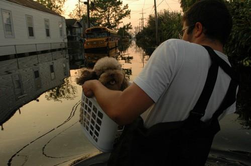 resgata pós-katrina (3)