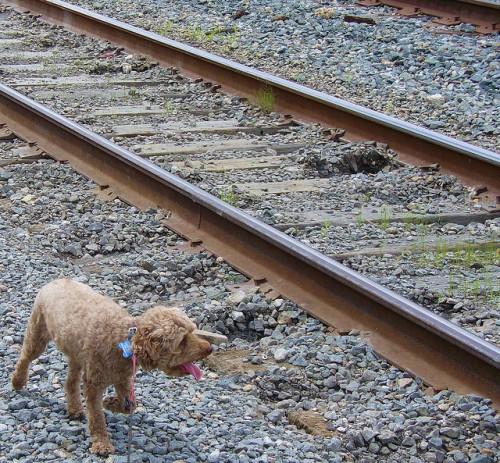 trilhos do trem em nova orleans