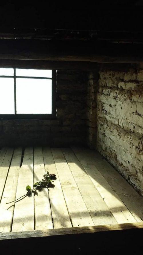 uma rosa murcha, no barracão das crianças, em auschwitz-birkenau